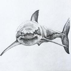 Great White Shark Drawing, Shark Tattoos, Fish Art, Shrimp Art, Animal Drawings, Drawings, Creature Drawings, Poseidon Tattoo, Tattoo Nightmares