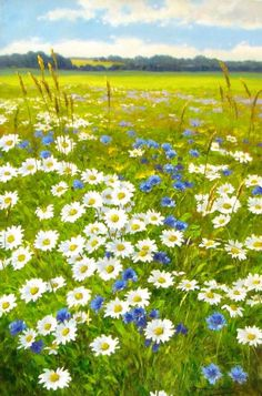 This is a field of daisies along with a pretty blue flower (sorry I have no idea what it is). This scene has a very country feel to it, and I like it.