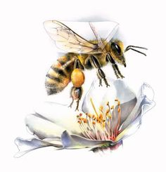 not sure about the flower part, but i want this bee on my right foot. [tattoo]