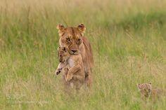 http://ift.tt/1K6283m #animals I am safe here by lakshkalyanaraman http://ift.tt/1JSeRqy