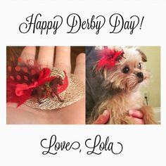 It's Derby Day  here in Louisville and I couldn't resist using this little hat to make a dollhouse size Derby hat as a fascinator for my dog! Minis are so fun!