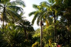 See the Costa Rican rainforest on a vacation with VBT.