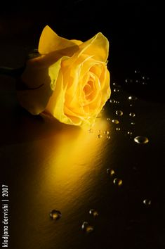 .yellow on black. by Alizee103 on deviantART
