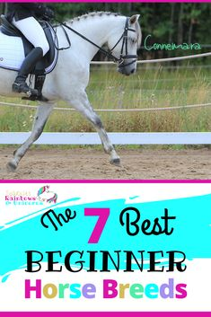 These are breeds that typically have the traits to be great for beginner riders. Although breed alone should not define whether a horse is suited for a beginner rider because there are exceptions to all breeds. I have chosen these breeds based the typical characteristics which are beneficial toward more novice riders. #bestbeginnerhorses #besthorsebreedsforbeginners #beginnerhorsebreeds #beginnerhorserider Horse Behavior, Horse Riding Tips, Pet Vet, Western Riding, American Quarter Horse, Riding Lessons, Horse Training, Horse Care, Horse Breeds