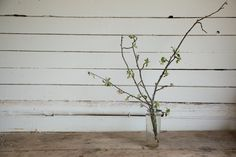 www.floramama.ca Nature, Plants, Most Beautiful Flowers, Apple Tree, June, Flora, Plant, The Great Outdoors, Mother Nature