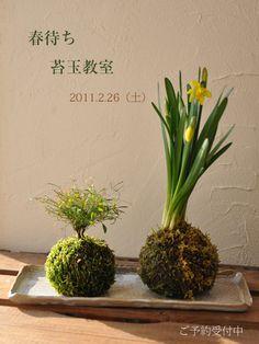 Kokedama - very pretty. Looks like a nice project.