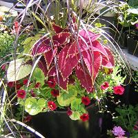 Google Image Result for http://www.containergardendesign.com/images/container-garden-arrangement.jpg
