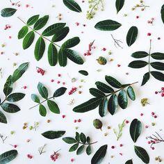 Julie Lee Food Patterns, Shape Patterns, Textures Patterns, Fruit Photography, Food Photography Styling, Julie Lee, Wedding Socks, Blogging, Photo Illustration
