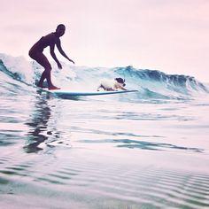 Surf doggie!