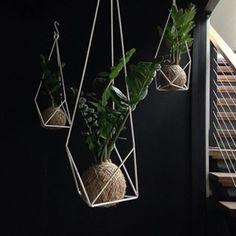 Fifteen Thirty-eight Botanist plant hangers + kokedama Zanzibar Gem's // ANTLER and MOSS