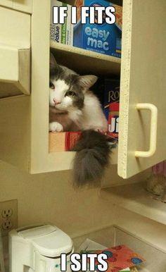 https://www.facebook.com/pages/Brat-the-Cat/112705392220715