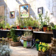 Love the idea of old garden paintings on the walls of this potting area.