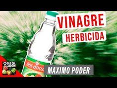 You searched for - Cosas del Jardin Coffee Area, Organic Homemade, Garden Online, Weed Killer, Greenhouse Gardening, Mountain Dew, Garden Plants, Garden Landscaping, Eco Friendly