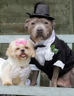 Last week she took her hobby a step further by getting two of her canines, Staffordshire bull terrier Bailey, and shih-tzu Coco, to tie the knot
