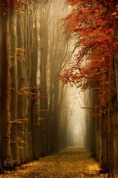 Runner on a misty fall day (Netherlands) by Lars van de Goor / 500px