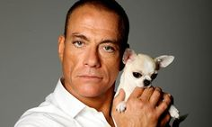Jean-Claude Van Damme: 'I tried to play the system; I was blacklisted' Cute Chihuahua, Chihuahua Puppies, Chihuahuas, Tiny Puppies, Action Movie Stars, Action Movies, Jc Van Damme, Karate Shotokan, Pets
