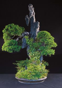 JPB:Bonsai Collection 7 |