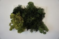 Have your own nature at home! Bring nature home with this amazing Iceland moss picture. It does not just make you more relaxed, but the best green decoration for your home or office. Do not hold back yourself if you want to pet it, it feels awesome! Awesome, Amazing, Herbs, Make It Yourself, Green, Nature, Pictures, Naturaleza, Photos