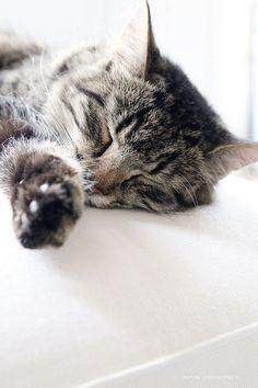 minni the cat4
