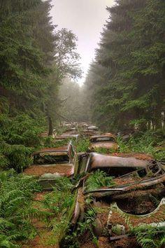 【車】70年間放置したらどーなるの?自然と一体化した世界大戦時の車両 | ぴくとぴっく