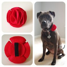 Red Ruffle Flowery Day Felt Accessory for Pet Collars by PitsnPosh, $12.00