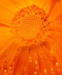 Orange Zest, Orange Blossom, Orange Yellow, Orange Color, Happy Colors, Warm Colors, Pantone, What's My Favorite Color, Orange Aesthetic