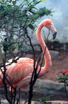 colombia+fauna+and+flora   Foto: Santuario de fauna y flora Los Flamencos en Kalipedia Colombia