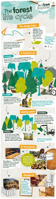 The forest life cycle (England) Sustainable Forestry, Making Space, Life Cycles, Cool Kids, Wildlife, England, Trees, Explore, Nature