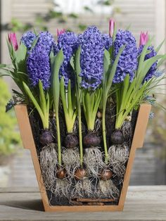 How to Create a Great Looking Spring Container #gardening #spring #dan330 http://livedan330.com/2015/03/06/how-to-create-a-great-looking-spring-container/