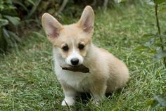 Cutest Dog Breeds: From Puppy To Adult