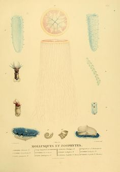 Atlas, 1e ptie. - Voyage de découvertes aux terres australes : - Biodiversity Heritage Library