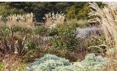 Residential and Public Landscape Design and Landscape Architecture. Landscape Architecture, Landscape Design, Garden Design, Vineyard, Plants, Outdoor, Outdoors, Vine Yard, Vineyard Vines