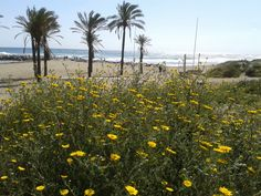 Cabopino beach southeast( 23.04.2013 17:00 h SAMSUNG DUOS Fbb) by http://www.skindefenders.com team