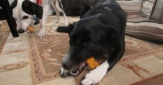 Sophie in the Kitchen: Sweet Potato Dog Chews---Ingredients 2 sweet potatoes Directions Preheat oven to 250 degrees F. Puppy Treats, Diy Dog Treats, Homemade Dog Treats, Dog Treat Recipes, Healthy Dog Treats, Dog Food Recipes, Sweet Potato Dog Chews, Sweet Potatoes For Dogs, Dog Cookies