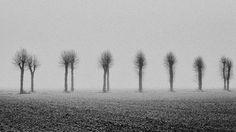 Populieren - een gedicht in zomerse tijden - poem and image on http://on.dailym.net/2bBqvLH #Apalca, #Gedicht, #Geest, #Luciferhoutjes, #Populieren, #Westerstorm