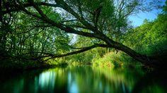 de stilte resoneert door deze omgeving heen...het ademt rust.