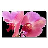 Found it at Wayfair - 'Orchid' by Kathie McCurdy Photographic Print on Canvas