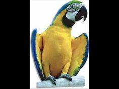 Kinderliedjes - Papegaaitje leef je nog