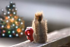 Berry, do you see what I see ? by Andre Villeneuve on 500px