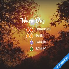 Warm Day - Essential Oil Diffuser Blend