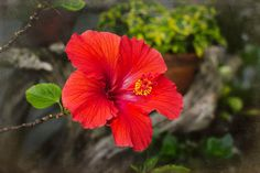 Check out this item in my Etsy shop https://www.etsy.com/listing/243514940/floral-photographhibiscus-flower