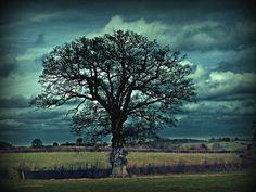 The Art Of Photographing Trees: 30 Amazing Photos – Blue Sky by nebojsa mladjenovic