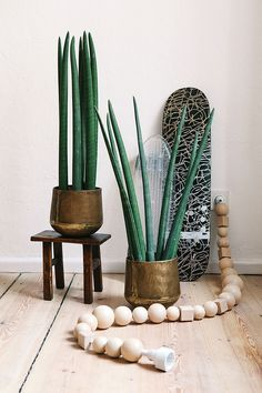 Maison: Friends of Friends x vitra Apartment in Berlin - Pflanzen & Interior - Cactus Interior Plants, Interior Design, Sansevieria Cylindrica, Cactus Y Suculentas, Blog Deco, Green Life, Green Plants, Large Plants, Cacti And Succulents