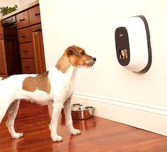 Petchatz – Interactive Pet-Cam Lets You Video Chat With Your Pet When You Are Away