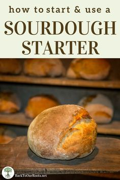 START A SOURDOUGH STARTER: Easy step-by-step instructions for the full 7 days until it's strong enough to bake with. Includes recipes. Start one today!