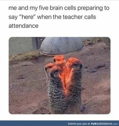 Crazy Funny Memes, Really Funny Memes, Stupid Funny Memes, Funny Tweets, Funny Laugh, Funny Relatable Memes, Funny Stuff, Fuuny Memes, Funny Humor