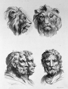 Como o ser humano seria se tivesse evoluído do leão ou da coruja?