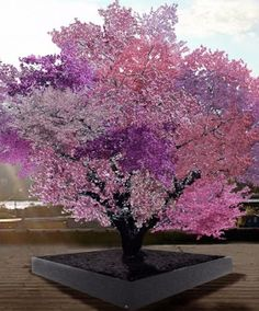 Instead of heading to the farmer's market, check out this literally magical tree