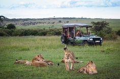 Kenya: Simply Safari And Beach Includes the Masai Mara and Diani Beach Diani Beach, Wildlife Safari, African Safari, East Africa, Travel And Leisure, Kenya, Kangaroo, Camping, Animals