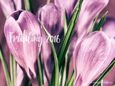 Wallpaper, Plants, Flowers, Wallpapers, Flora, Plant, Wall Papers, Planting